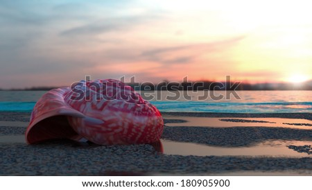 Shells on beach with sunset - stock photo