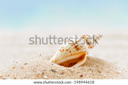 Shells  on sandy beach  - stock photo