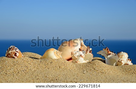 Shells on sandy beach. In the background of sea and sky - stock photo