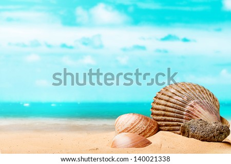 Shells on the beach - stock photo