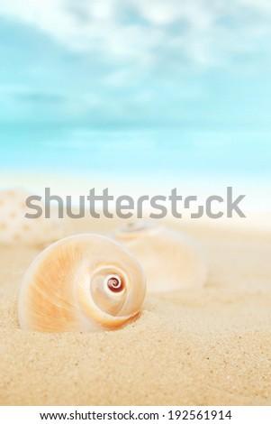 Shells on the beach. - stock photo