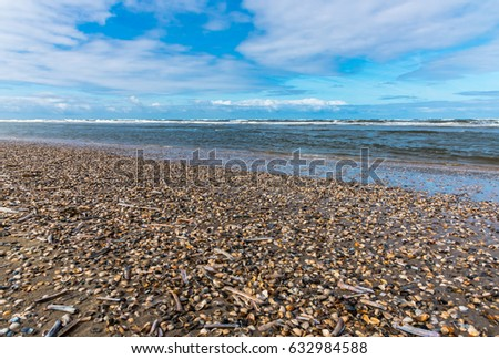 Shells on the beach at North Sea