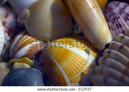 Shells on the beach (exclusive at shutterstock) - stock photo