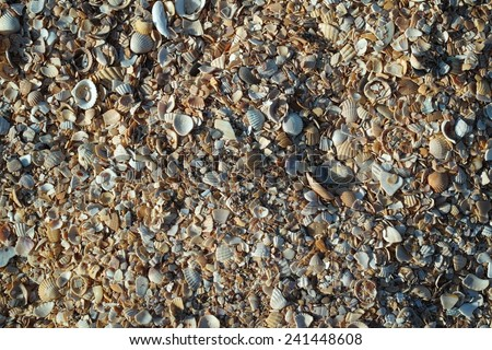Shells on the beach. Sea of Azov. - stock photo