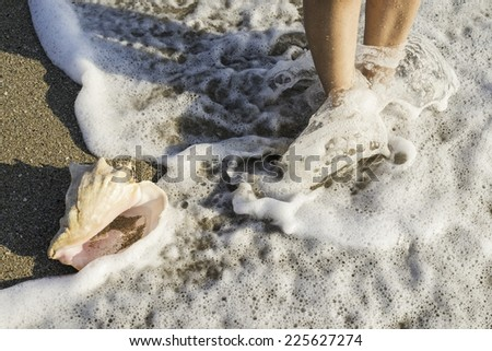 Shells on the beach. Sun light. Foots in water - stock photo