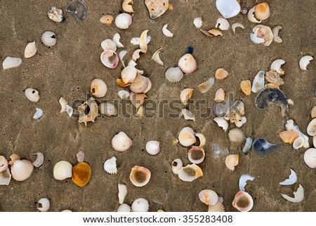Shells on the beach. Un-focus image. - stock photo
