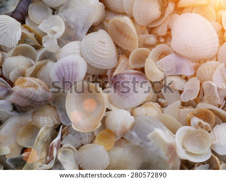 Shells on the beach with sunlight. - stock photo