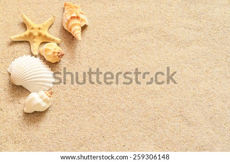 Shells on the sand - stock photo