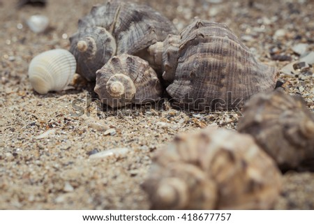 Shells on the sand as a beach background. Vacation theme concept