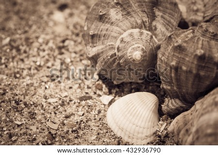 Shells on the sand as a beach background. Vacation theme concept. Sepia toned effect