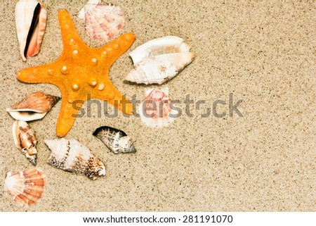 Shells On The Sand Background./ Shells On The Sand Background. - stock photo