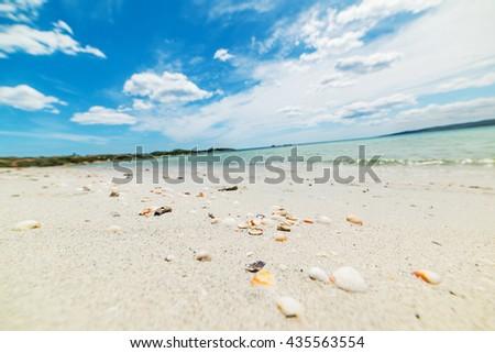 shells on the sand in Cala Brandinchi, Sardinia - stock photo