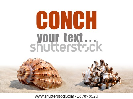 Shells on the sand isolated - stock photo