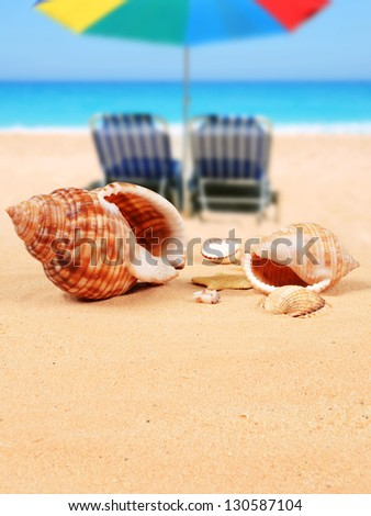 Shells on the sandy beach and beach chairs with parasol in the background - stock photo