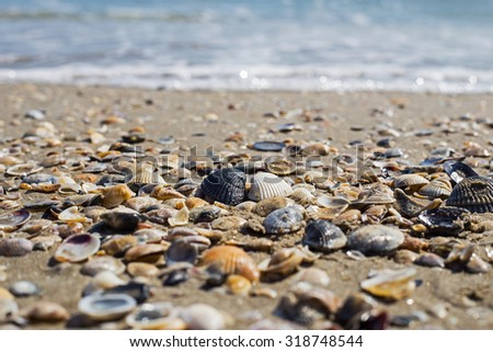 Shells on the sea shore, the black and white shells, Milano Marittima, Italy, selective focus  - stock photo
