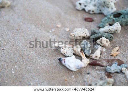 Shells on the seaside at koh kham,Trat,Thailand