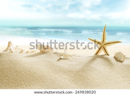 Shells on tropical beach. - stock photo