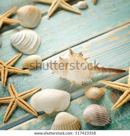 Shells on vintage shabby wood - stock photo