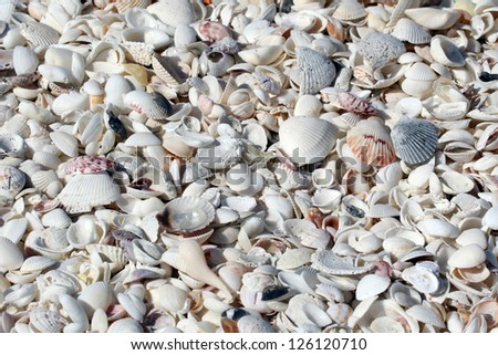 Shells, Shells and more Shells - stock photo