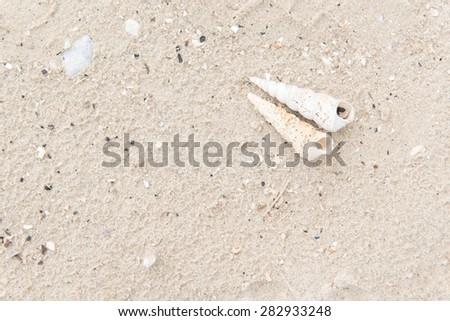Shells with sand background - stock photo