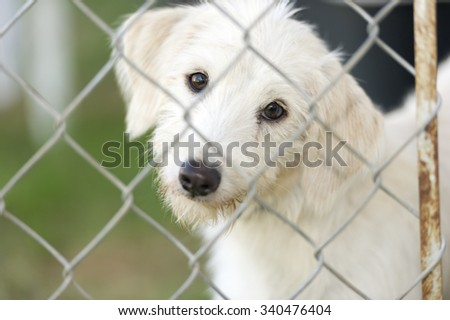 Shelter dog is cute dog in an animal shelter poking his nose through the fence wondering who is going to take him home. - stock photo