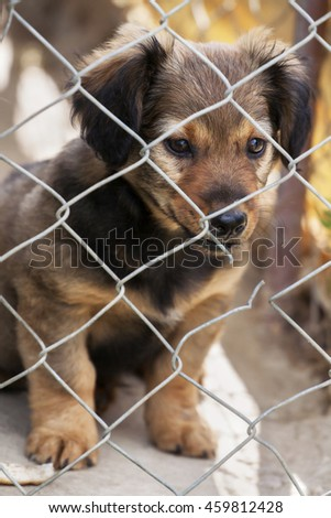 Shelter dog, rescue - cute puppy looking behind the fence - stock photo