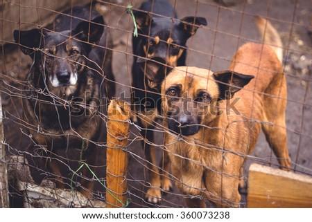 Shelter for homeless dogs - stock photo