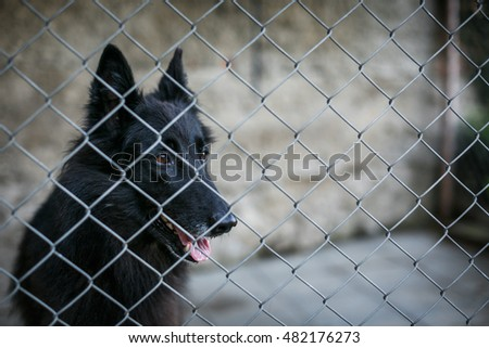 Shelter for homeless dogs - dog behind in a cage waiting for a new owner to adopt him