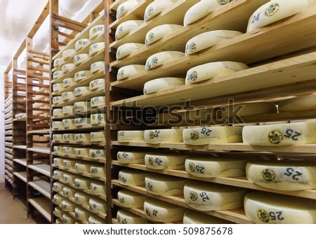 Shelves of aging Cheese on wooden shelves at maturing cellar in Franche Comte dairy in France