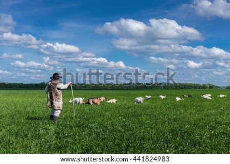 Shepherd and herd of goats on a green pasture