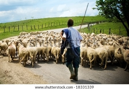Shepherd and sheep - stock photo