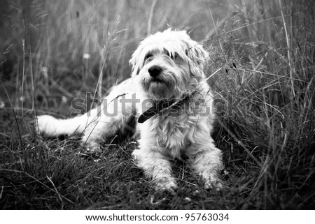 Shepherd dog. Against the background of grass. - stock photo