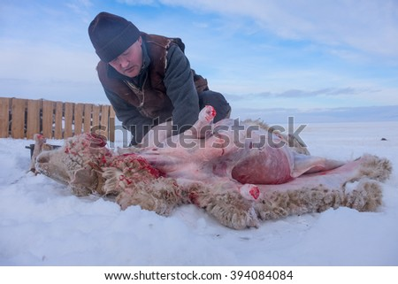 Shepherd with sheep skin removes from our own farm - stock photo