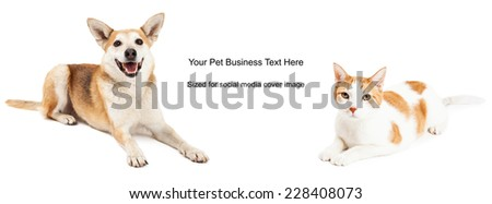 Shiba Inu mixed breed dog and domestic shorthair cat. Image cropped to the size of a social media timeline cover placeholder