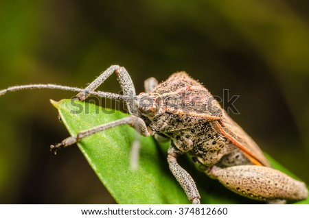 Shield Bug Insect Macro On Green Leaves - stock photo