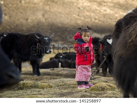 Shigatse,China-OCT 11:Unidentified child in Yak farm is curious about the relief team on October 11,2011 in Shigatse,China.Children in rural Tibet do not received enough food and education.