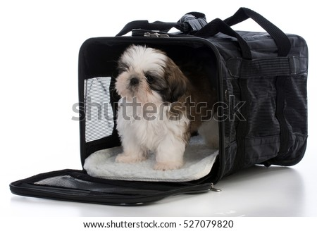 shih tzu puppy in a travel carrier on white background