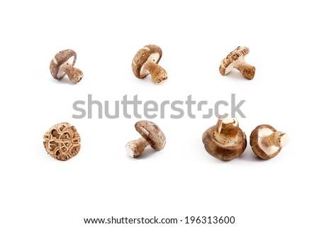Shiitake Chinese mushrooms isolated on white background - stock photo