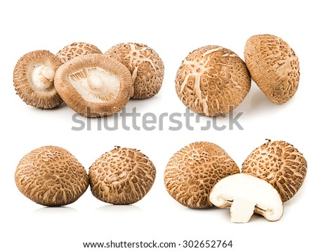 Shiitake Mushrooms isolated on white background - stock photo