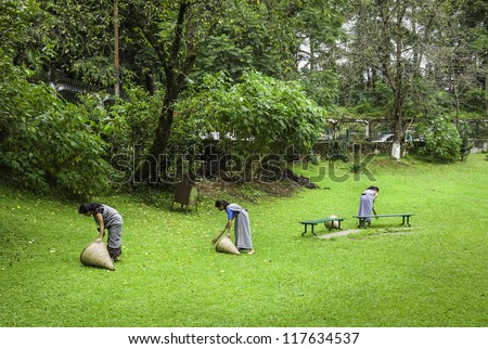 SHILLONG, INDIA - SEP 07, 2011: Unidentified municipal workers sweep up the dead and fallen leaves using traditional brooms and baskets on September 07, 2011 in Shillong, Meghalaya, India. V