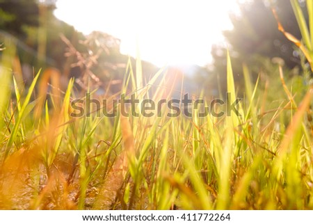 Shining grass by the sun, in the summer/Shining grass by the sun - stock photo
