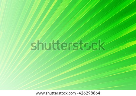 Shining rays of green light, Shiny green sunbeams, Bright sunbeams on green background, Abstract bright background, Green background - stock photo