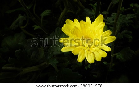 shiny flower against black background - stock photo