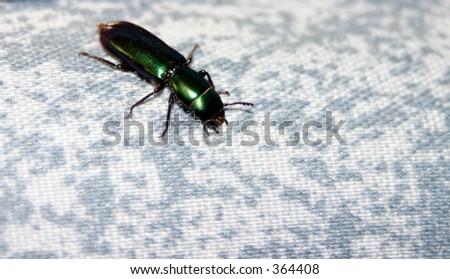 Shiny Green Beetle on Fabric - stock photo
