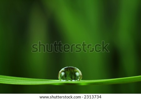 Shiny rain drop on grass closeup (space for text)