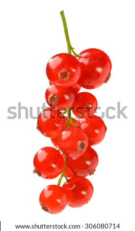 shiny redcurrant isolated