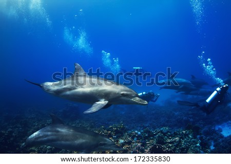 Shoal of dolphins swimming underwater over coral reef with group of divers - stock photo