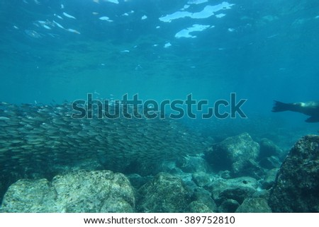 Shoal of fish and sea lion underwater - stock photo