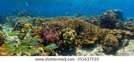 Shoal of fish on the coral reef - panorama  - stock photo