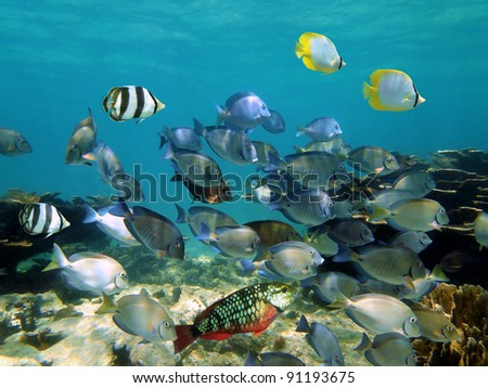 Shoal of tropical fish in a coral reef of the Caribbean sea - stock photo
